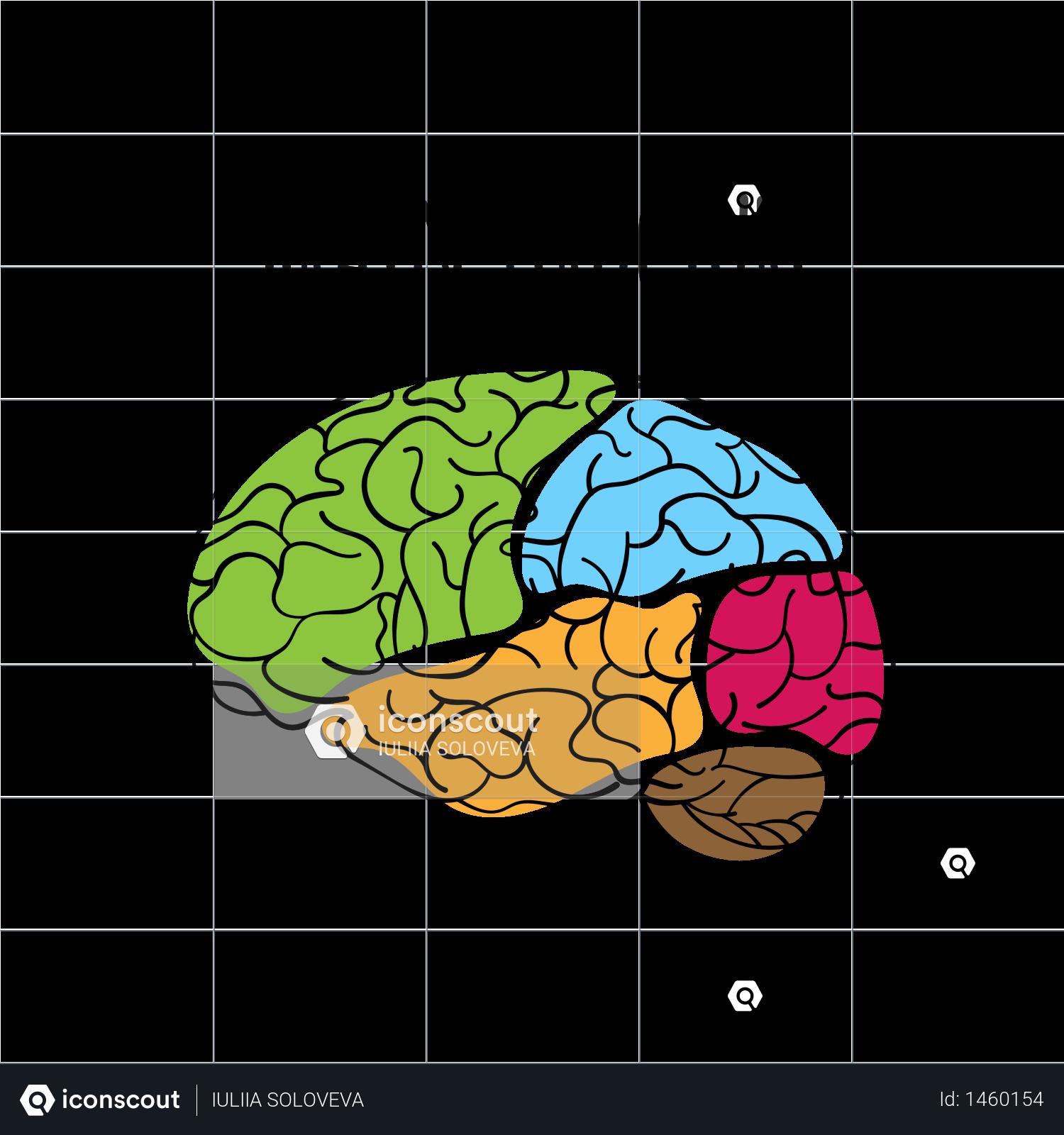 Premium BRAIN STRUCTURE Nervous System Illustration ...