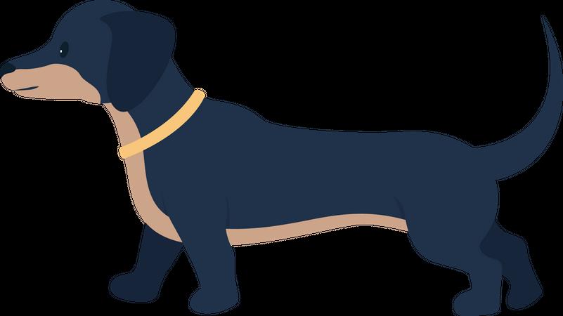 Adopted dog Illustration