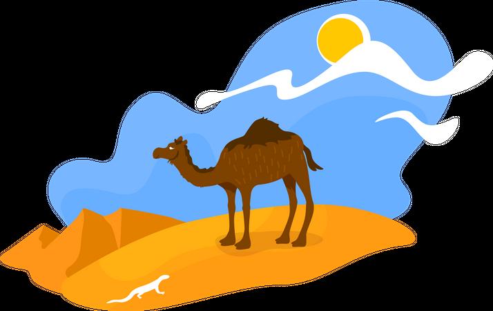 African desert Illustration