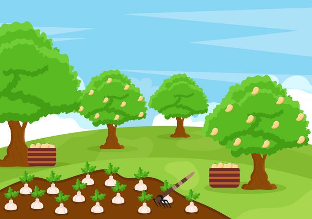 Agricultural land Illustration