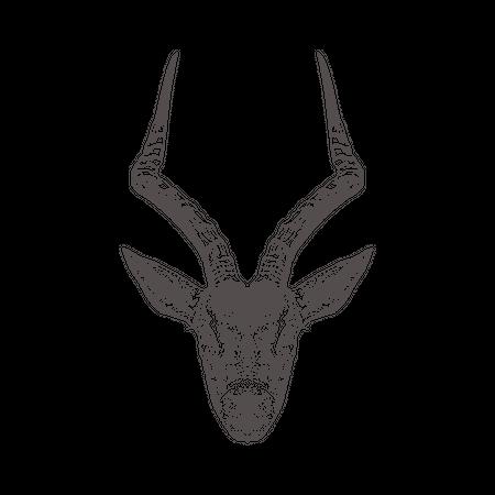 Antilop Illustration