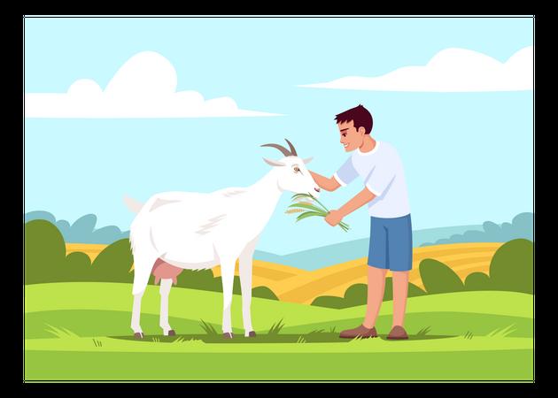 Boy feeding goat Illustration