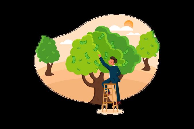 Business man taking money from money tree Illustration
