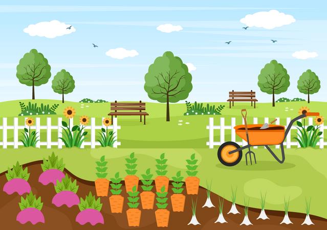 Carrot Farm Illustration