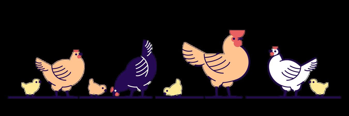 Chickens Illustration