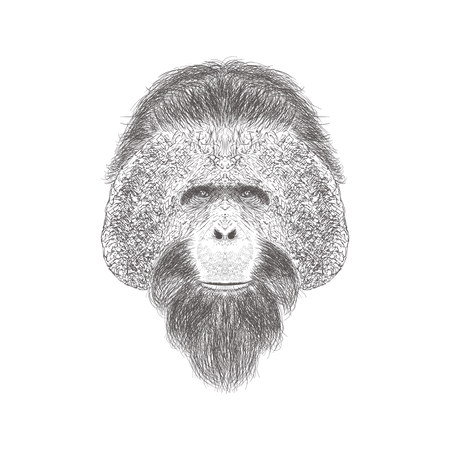 Chimpanzee Head Illustration