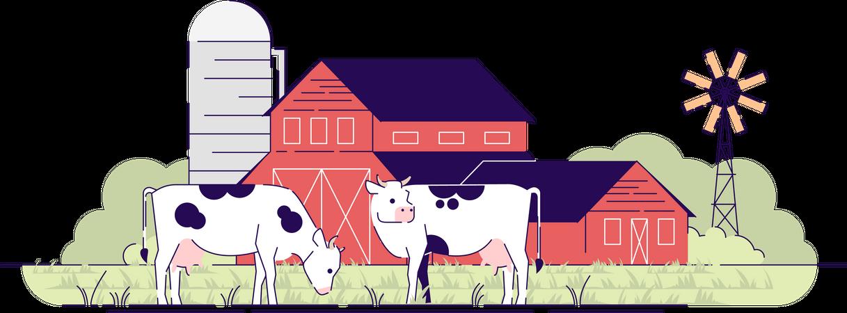 Dairy farm Illustration