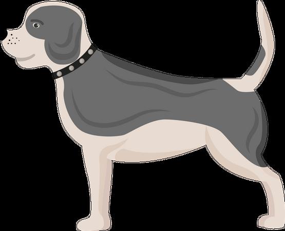 Dog with grey spots Illustration