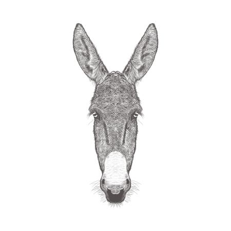 Donkey Head Illustration