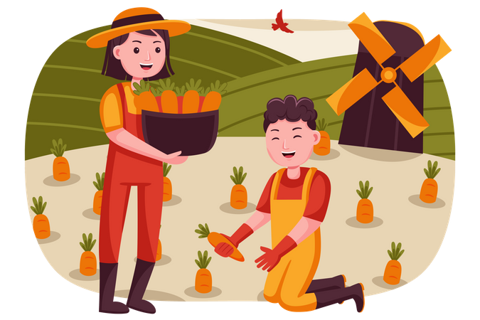 Farmer couple collecting carrots from farm Illustration