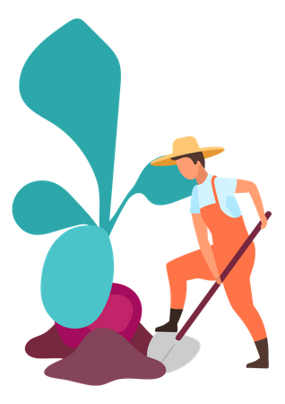 Farmer doing root Crops Harvesting Illustration