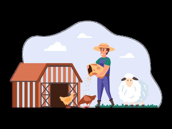 Farmer feeding chickens Illustration