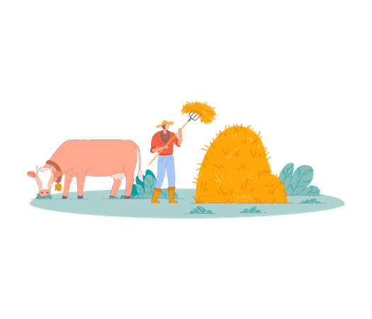 Farmer Gathering haystack with cow Illustration