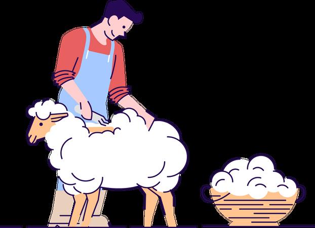 Farmer shearing sheep Illustration