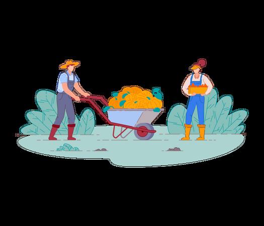 Farmers harvesting fruit crop Illustration