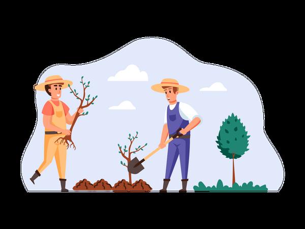Farmers planting new plant Illustration