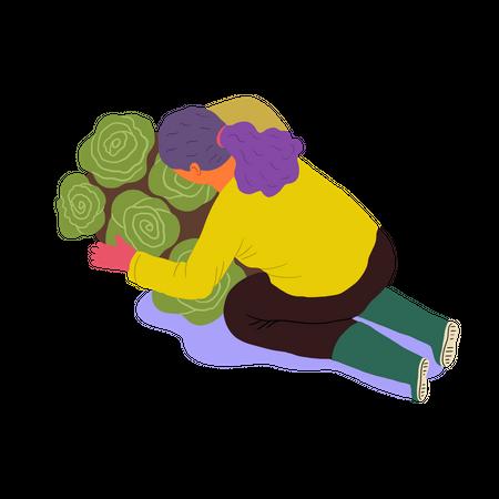 Female farmer arranging Lettuce Illustration