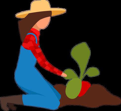 Female farmer digging up ripe beetroots Illustration