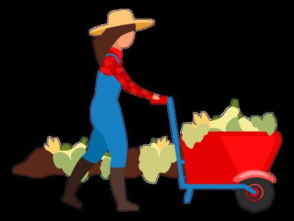 Female farmer harvesting crops Illustration
