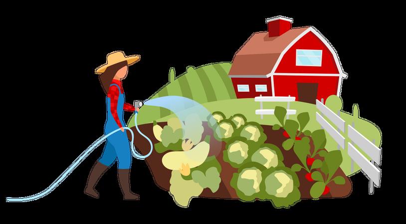 Female farmer watering vegetable garden Illustration