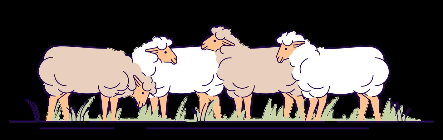 Flock of sheep on pasture Illustration