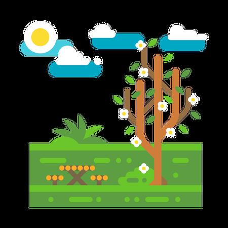 Garden Illustration