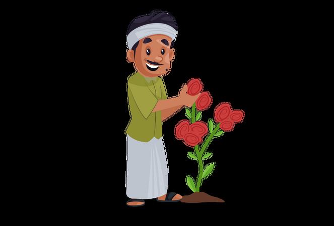 Gardener picking up rose from plant Illustration