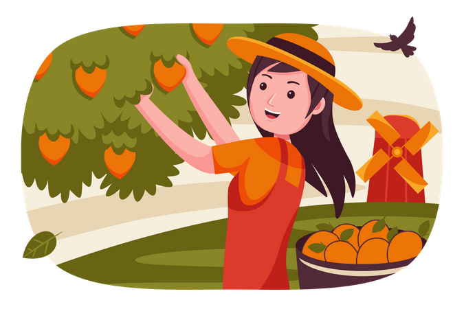 Girl collecting fruits from tree Illustration