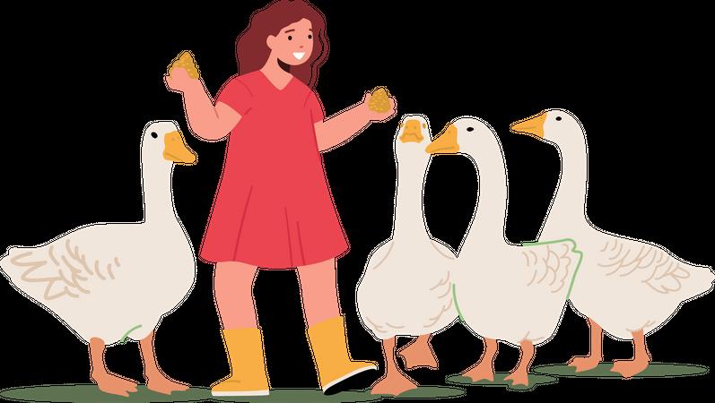 Girl feeding fowl to ducks Illustration