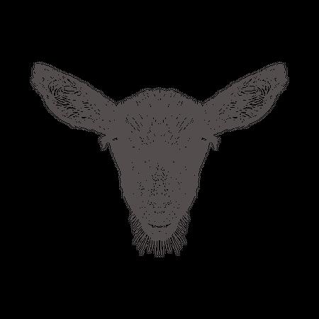 Goat Head Illustration