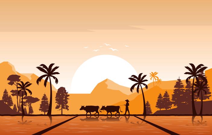 Golden Sunrise in Asian Rice Field Illustration