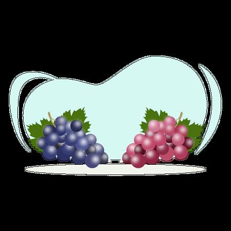 Grape fruit Illustration