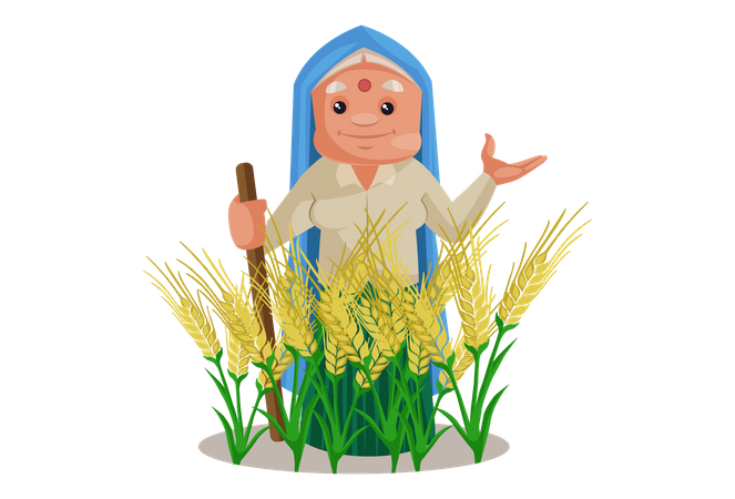 Haryanvi Woman in wheat crop agricultural land Illustration