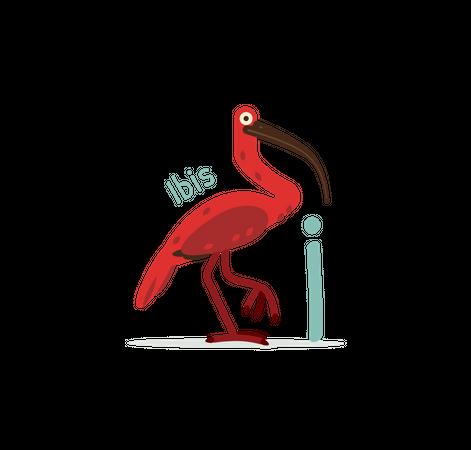 I for Ibis Illustration