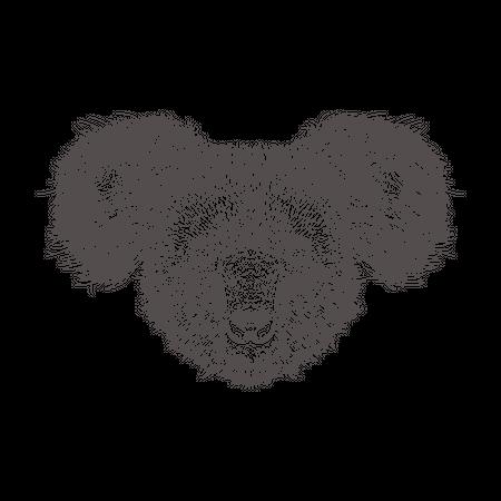 Koala Illustration