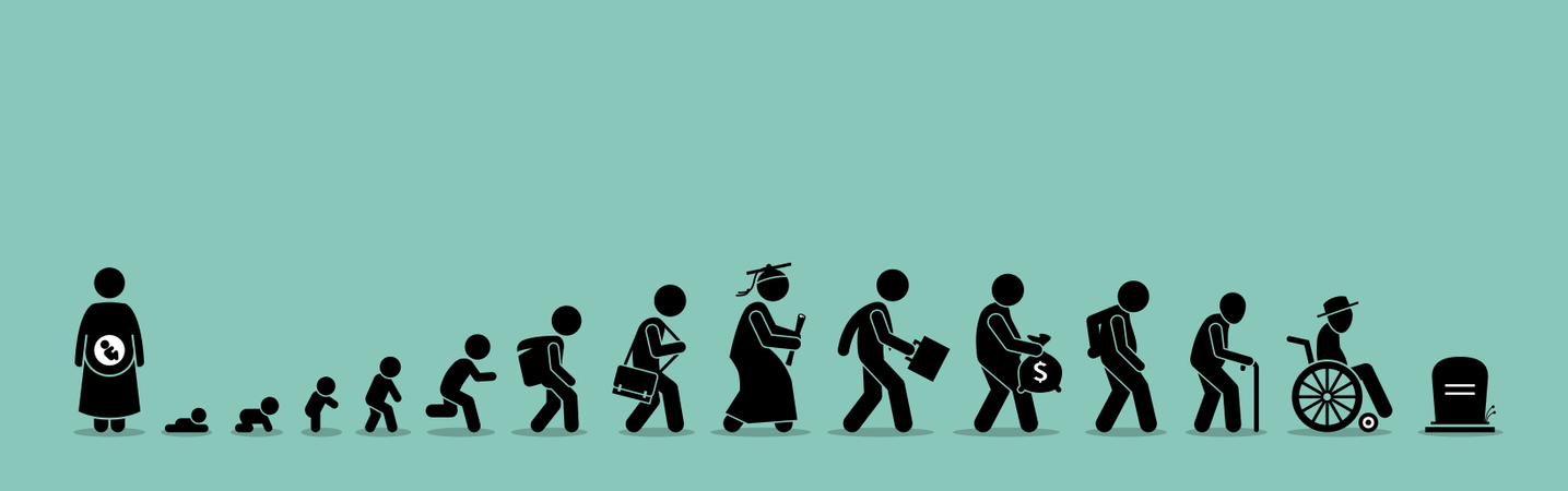 Life cycle and aging process. Illustration