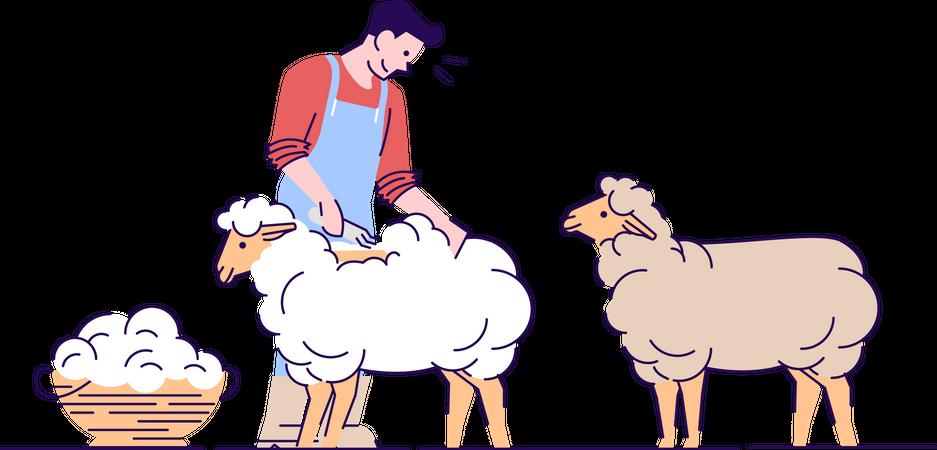 Male farmer shearing sheep Illustration