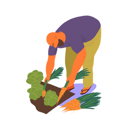 Men collecting carrot and lettuce Illustration