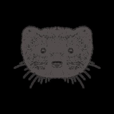 Mongoose Illustration