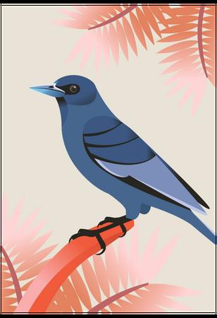 Mountain bluebird Illustration
