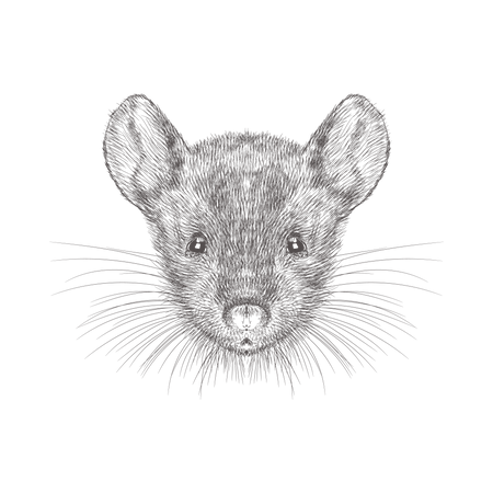 Mouse Face Illustration