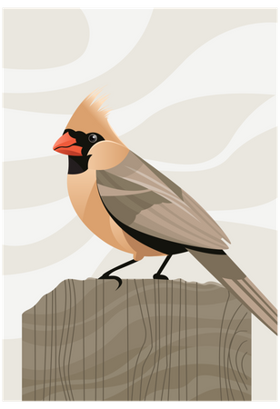 Northern cardinal Illustration