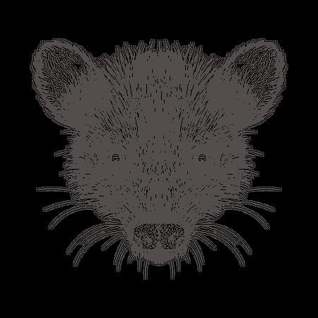 Orangutan Illustration