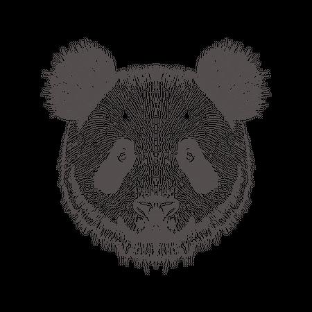 Panda Illustration
