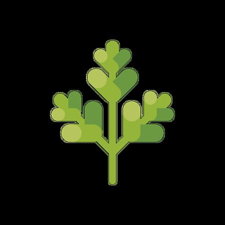 Parsley leaf Illustration