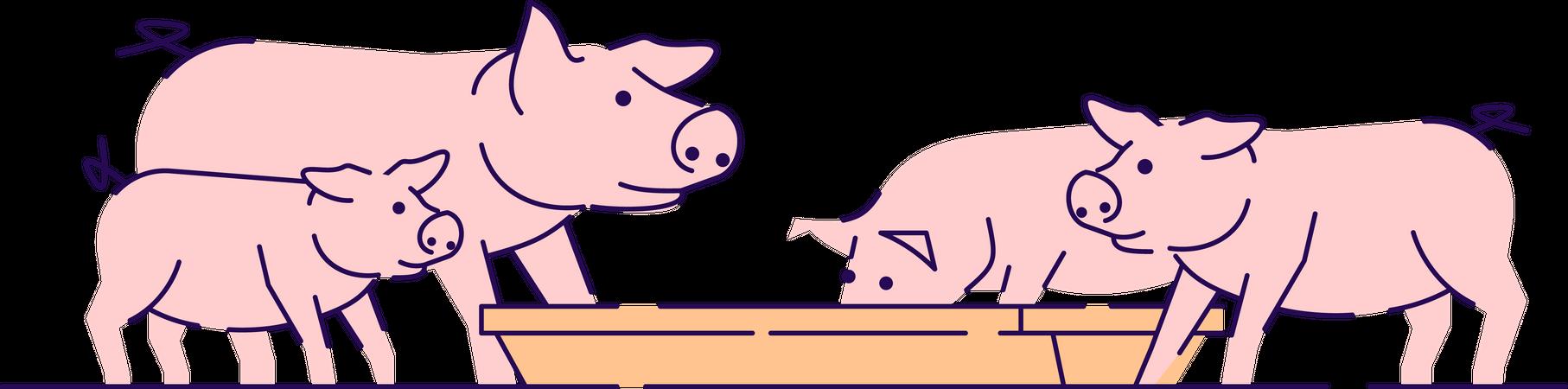 Pigs feeding Illustration