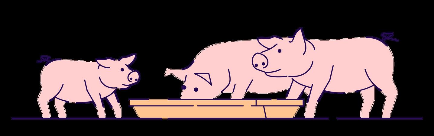 Pink pigs feeding Illustration