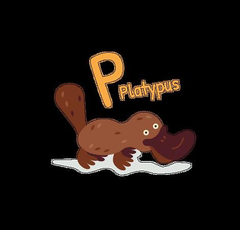 Platypus Illustration