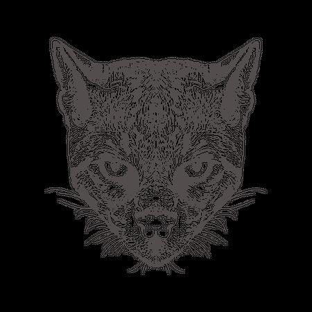 Possum Illustration