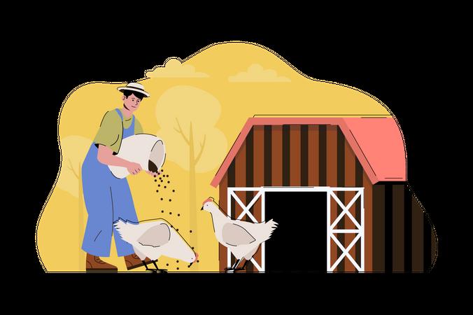 Poultry farming Illustration
